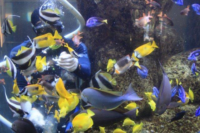 Underwater World, Сингапур