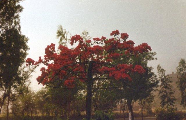 Парк Камала Неру, Индия