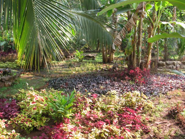 Экскурсия на ферму специй, Индия