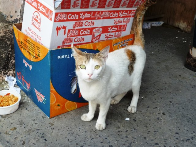 Главная кошка рынка.