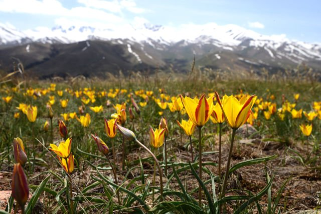 Весна в Киргизии