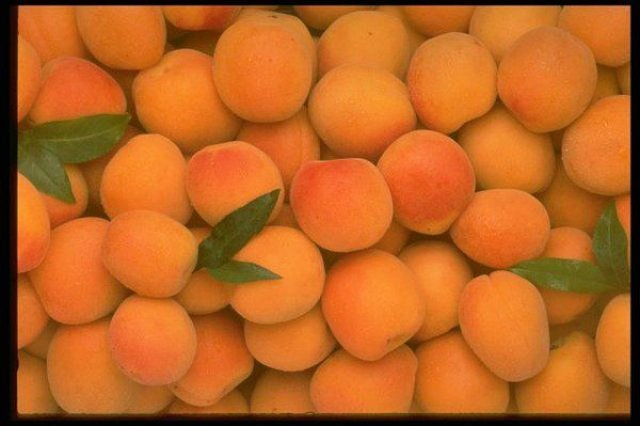 Иссык Кульский абрикос