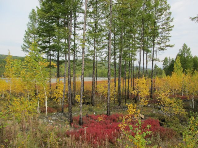 Природа в Восточной Сибири в начале сентября