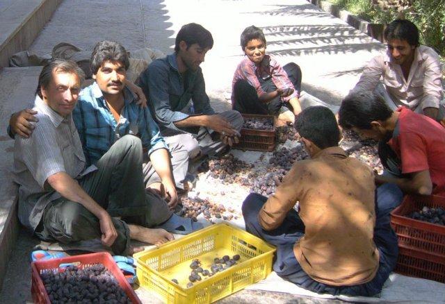 Несколько иранцев, с которыми я подружился во время своего путешествия