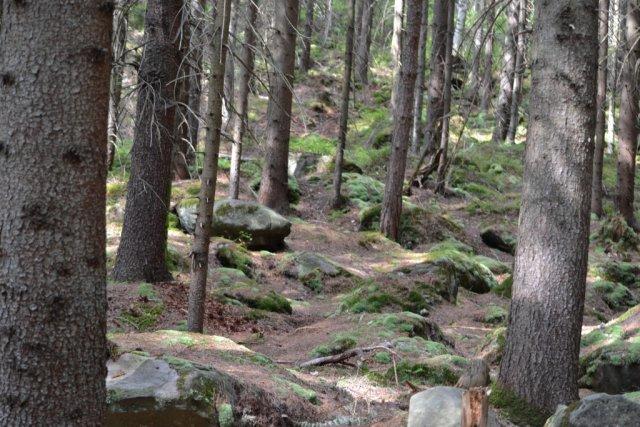 Карпатский лес.