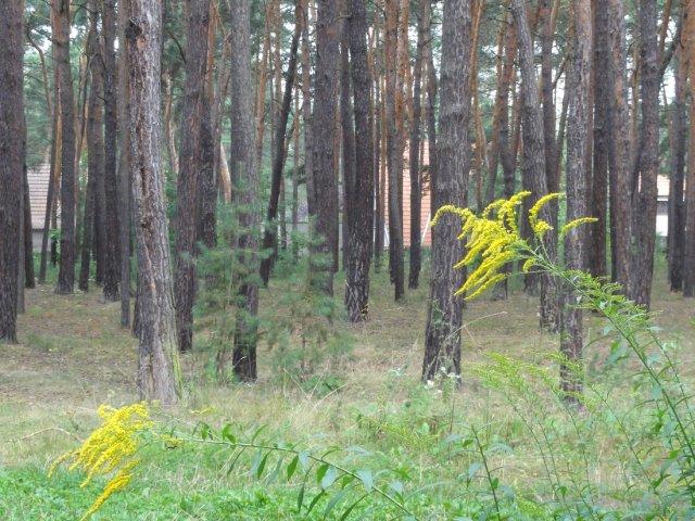 Lhota - поселок в лесу