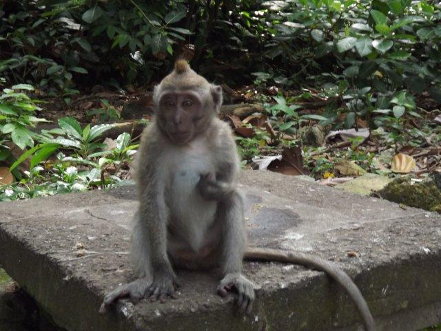 В парке обезьян