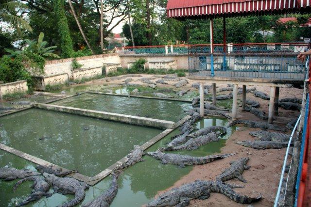 Камбоджа, крокодиловая ферма