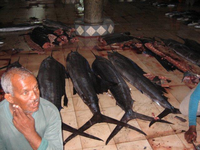 Рыбный рынок на Мале, Мальдивы