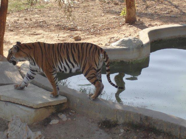 Зоопарк «Фригия»