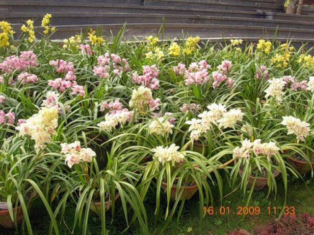 Ботанический сад, Мьянма