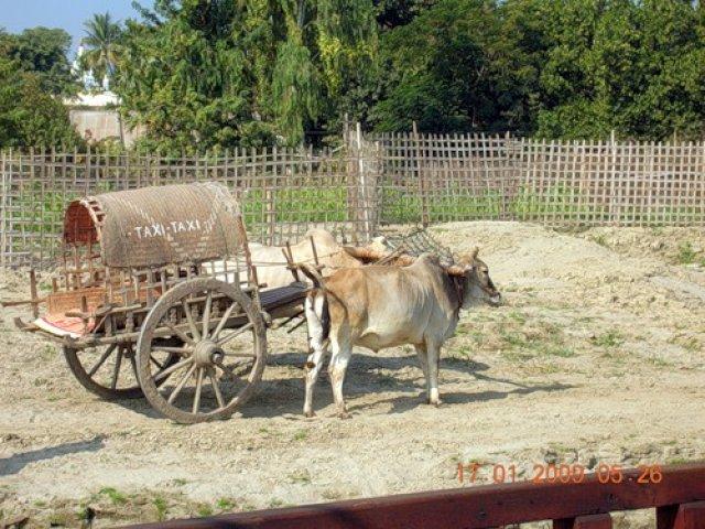 Повозка с быком, Мьянма