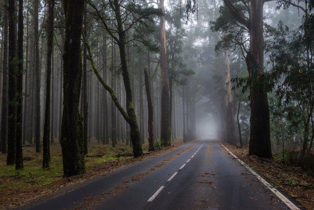 леса Эсперансы