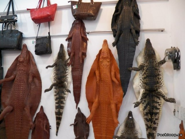 Натуральная кожа крокодила! На крокодильей фабрике.