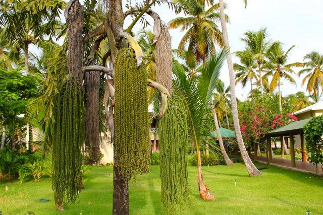 это пальма