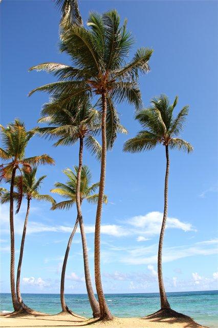 кана в переводе - пальма
