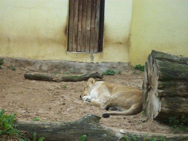 а вот и вторая девочка, так же безмятежно спит