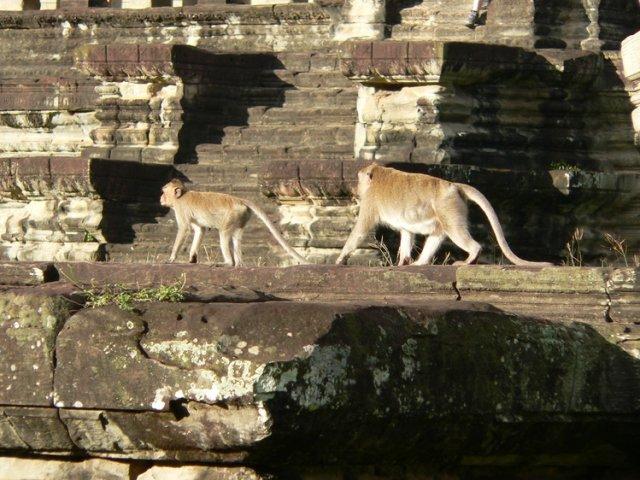 Дозор на территории Ангкор-Вата, Камбоджа