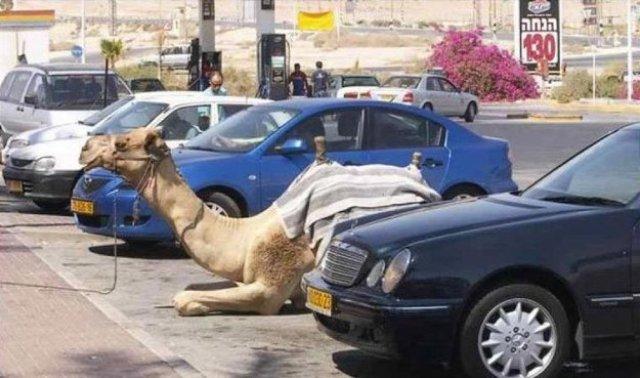 эмиратский паркинг