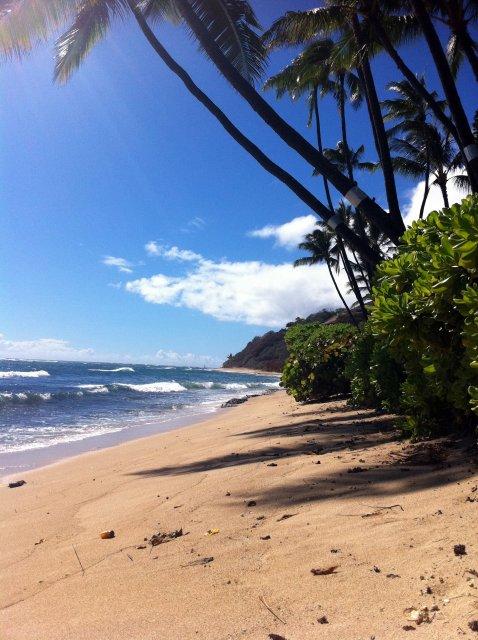 Пляжи Мауи под пальмами, Гавайи