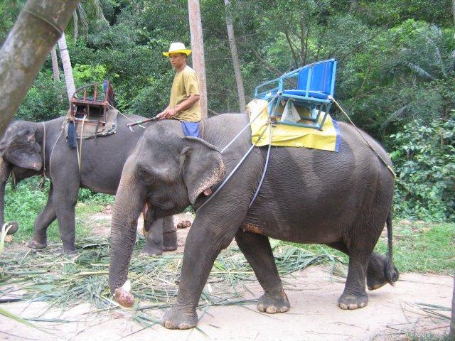 Прогулка на слонах, Самуи