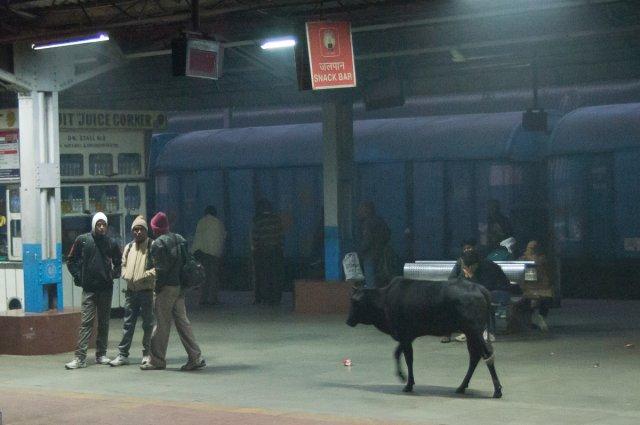 На вокзале, Джанси, Индия