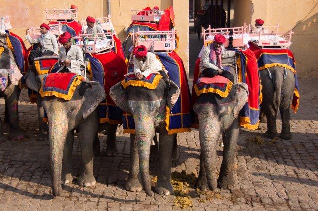 Слоны в форте Амбер, Джайпур, Индия