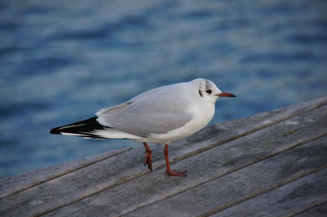 Птица в порту Барселоны
