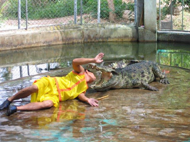 Шоу крокодилов, Самуи