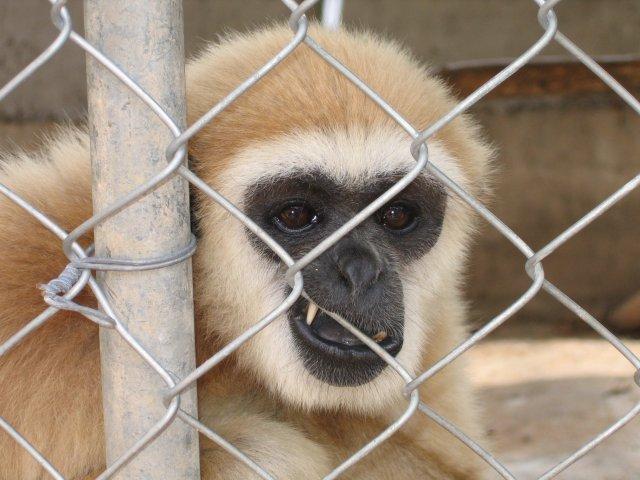 В зоопарке, Самуи