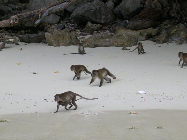 Остров обезьян, Таиланд
