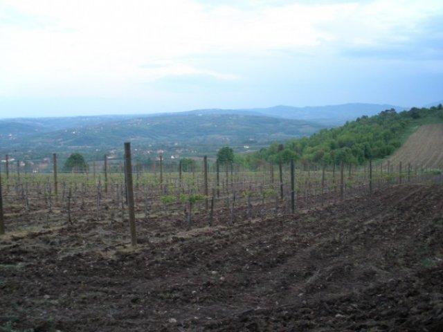 Сербия. Виноградники в сербской провинции