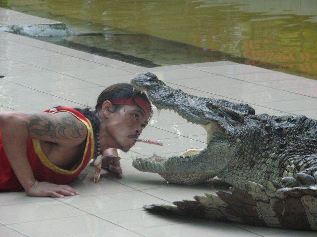 Шоу крокодилов в зоопарке, Пхукет