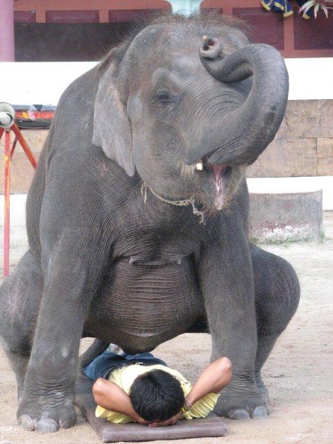 Шоу слонов в зоопарке, Пхукет