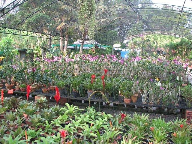 Сад Орхидей в зоопарке, Пхукет
