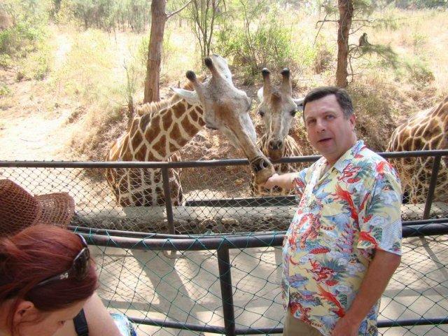 Публичное кормление жирафов в Haller Park