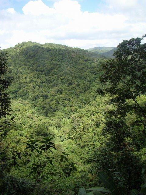 Зеленый океан Доминики