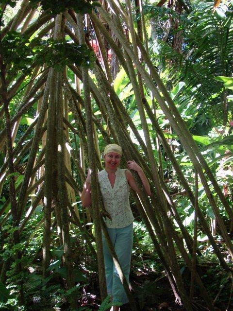 Мангровые джунгли (Даймонд-Гарденс)