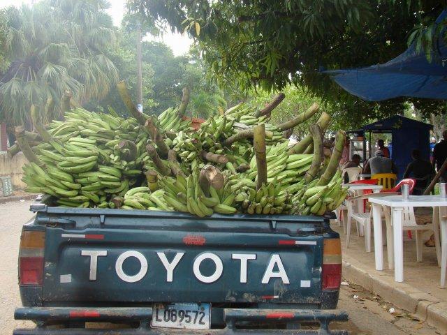 Банановый урожай