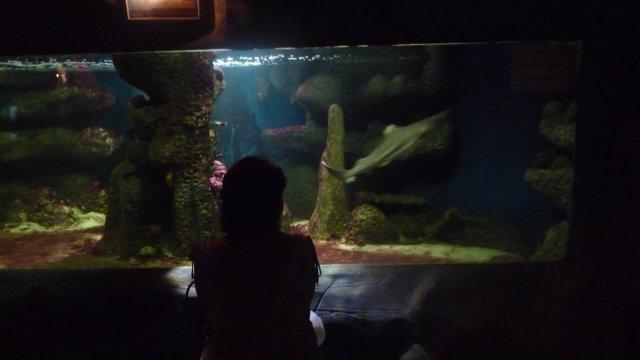 Морской аквариум в Крыму