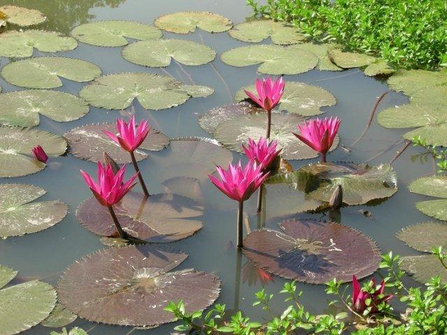Суккхотай, Таиланд