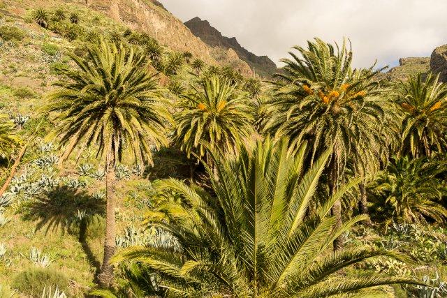 Горная деревенька Маска, Тенерифе