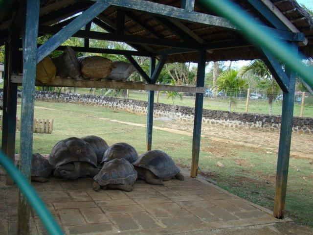 Ботанический сад Маврикия
