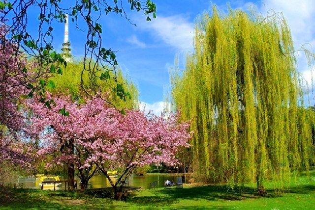Платное фото в парке