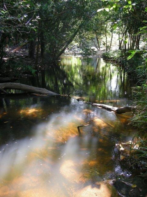 Река тысячи фаллосов