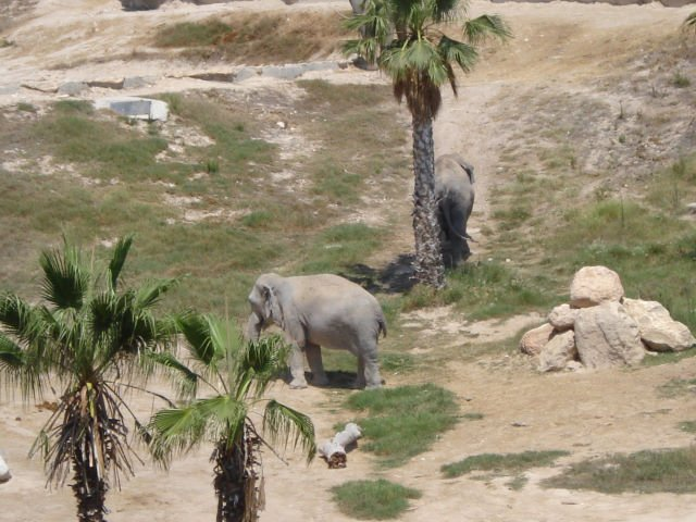 Зоопарк Mundomar, Бенидорм, Испания