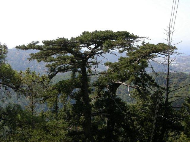 Профитис Илиас, остров Родос, Греция