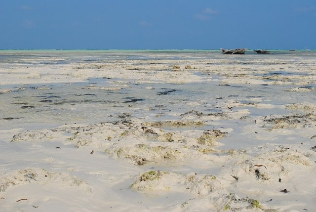 Jambiani. Shene Bungalows. Low-tide