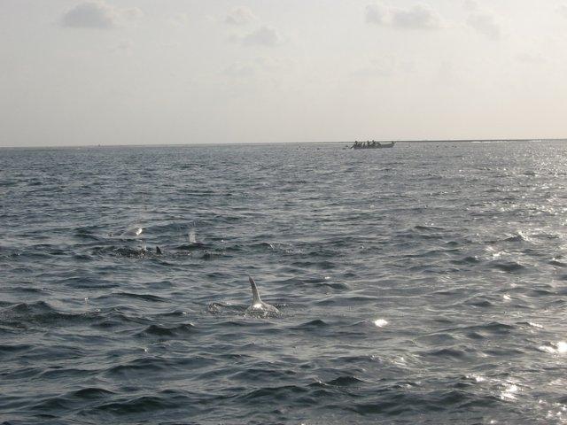 Kizimkazi. Dolphin Tour