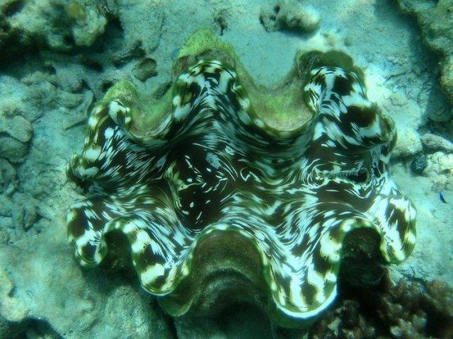 Подводный мир Таиланда